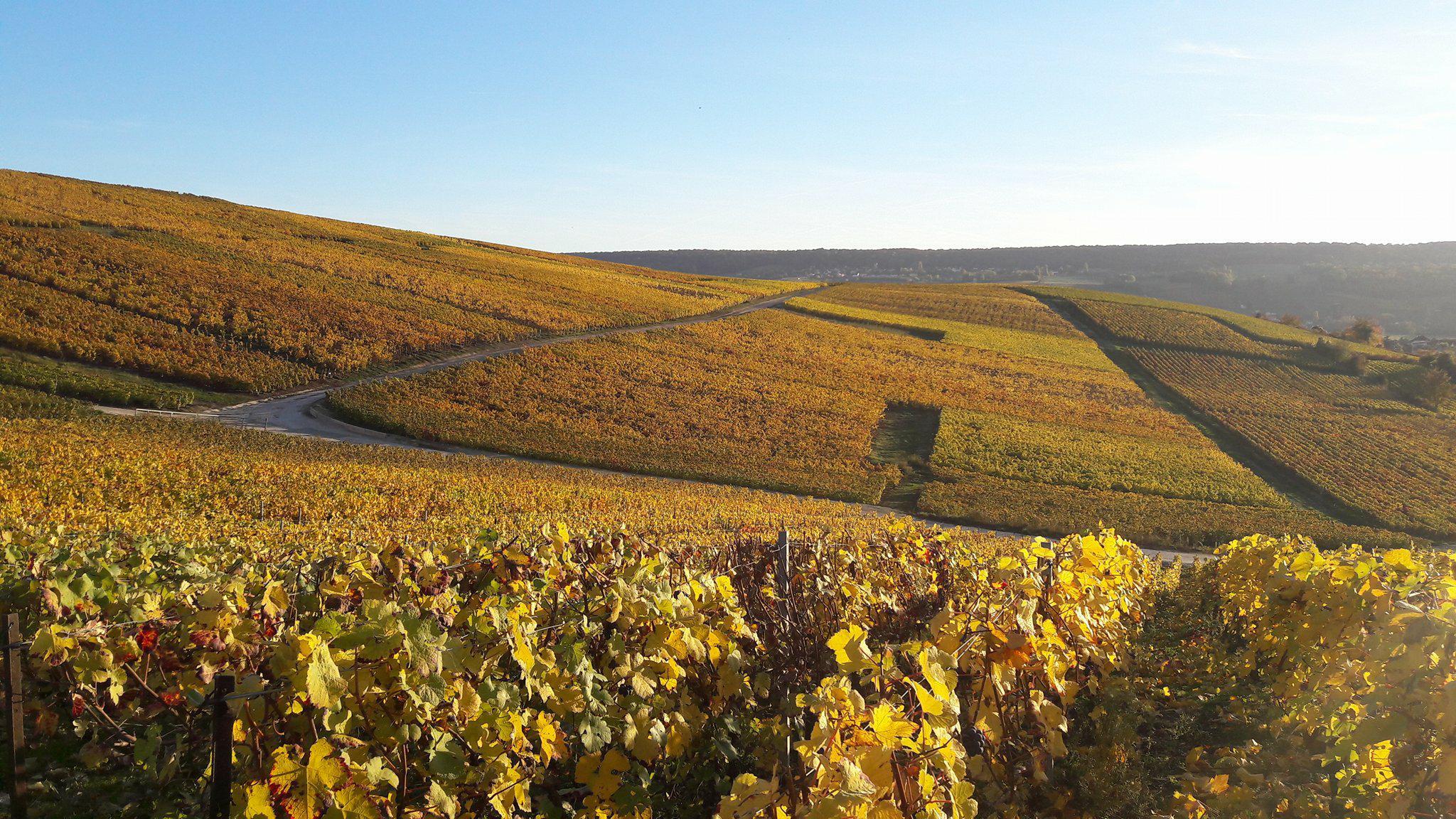 Vignes en automne près de Damery