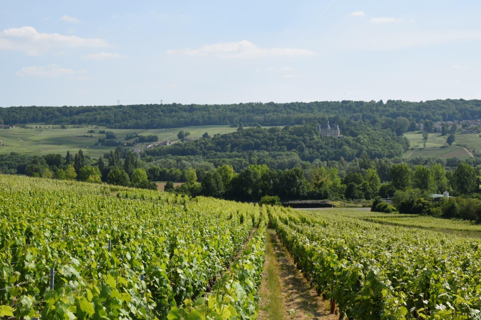 Vue sur les vignes | Champagne Jean-François Launay